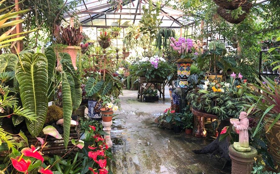 Jard n bot nico de vallarta entre los cinco mejores de for Jardin botanico el ejido