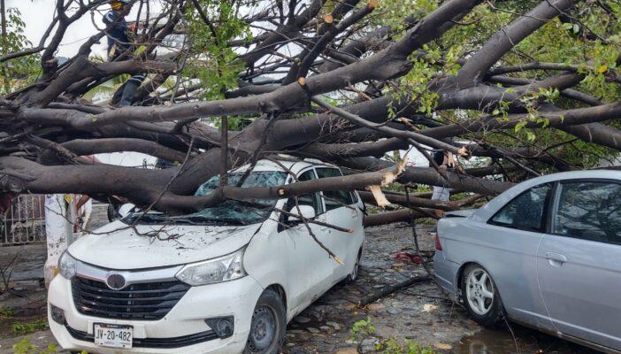 Múltiples árboles caídos deja la fugaz lluvia sabatina en Vallarta