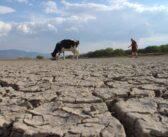 Sequía en Nayarit es la más fuerte de la historia