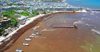 Vivirá Quintana Roo máximo histórico de sargazo en sus playas