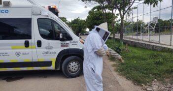 4 personas y 2 perritos fueron atacados por un enjambre de abejas
