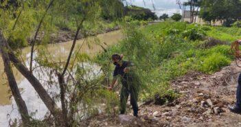 Patrulla verde y ecología intentan salvar a cocodrilo con varilla en la cabeza